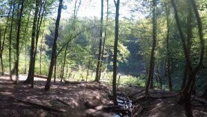saarkohlenwald-1-harfuessler-trail