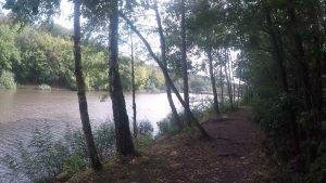 saarkohlenwald-2-harfuessler-trail