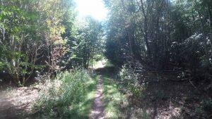 saarkohlenwald-3-harfuessler-trail